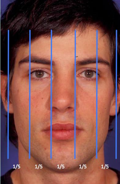 VISTA FRONTAL: La anchura de la cara se divide en cinco partes iguales