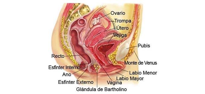 cirugía genital femenina reparadora, estética o rejuvenecedora